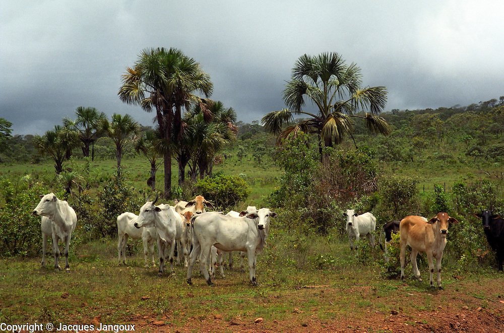 Savanna (cerrado) biome, Brazilian  Highlands, Goiás State, Brazil