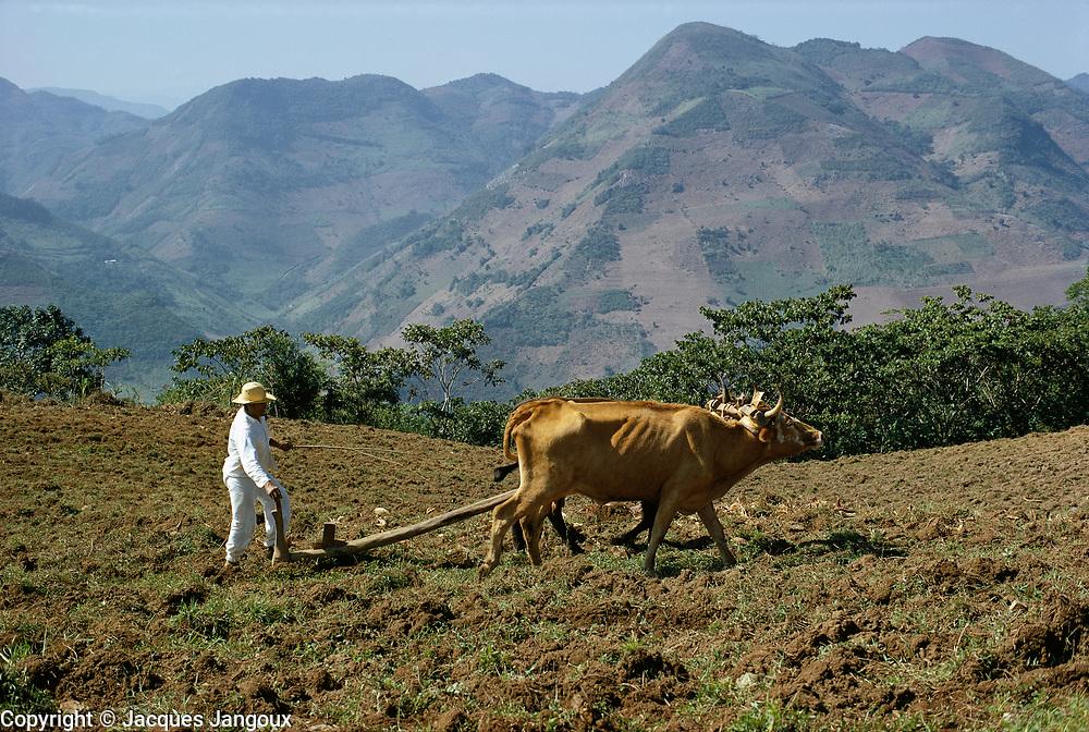 Indian plowing field in Sierra de Puebla mountains, Puebla State, Mexico.
