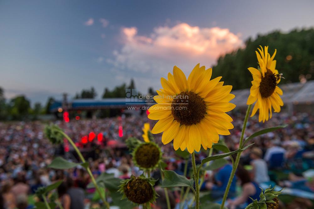 summer concert gardens evening