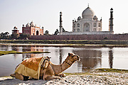 Taj Mahal  built  on the banks of river Yamuna by emperor Shah Jahan in the memory of his beloved wife Mumtaz Mahal.<br /> (Photo by Matt Considine - Images of Asia Collection)