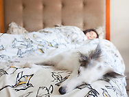 young girl and dog relaxing in bed at home