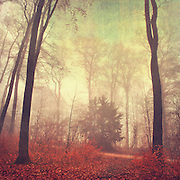 Moody forest scenery<br /> Texturized photograph<br /> Prints &amp; more: http://society6.com/DirkWuestenhagenImagery/the-way-out-jcX_Print