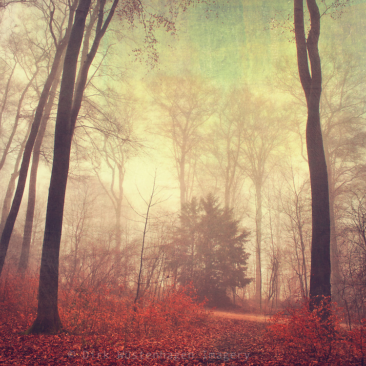 Moody forest scenery<br />