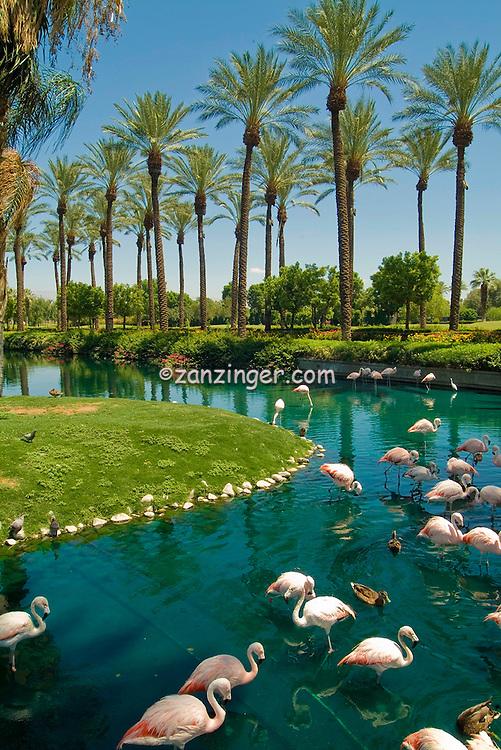 Pink Flamingos J.W. Marriott Palm Desert CA, Vertical, Palm trees, Unique Quality