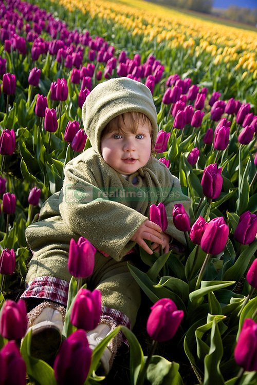 July 21, 2019 - Toddler Sitting In Field Of Tulips (Credit Image: © Richard Wear/Design Pics via ZUMA Wire)