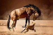 A horse plays with a dog in a paddock.