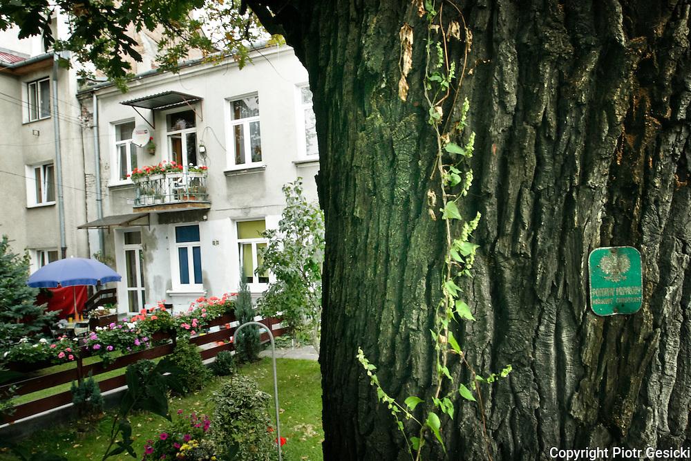 20.09.2006 Warszawa kamienica przy ul Gdanska 12 i drzewa pomnik przyrody.Fot Piotr Gesicki