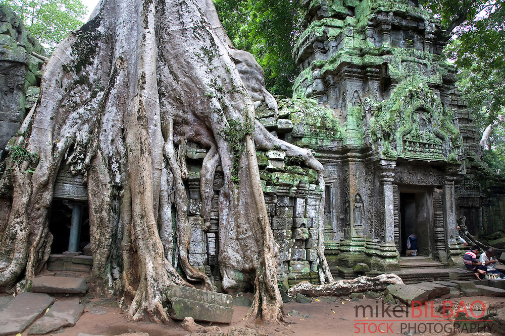 Ta Prohm temple and tree roots. Angkor temples. Cambodia, Asia