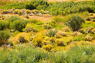 Great Basin Tapestry, Owens Valley, California