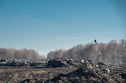 November 10, 2018 - Tambov Region, Tambov region, Russia - Landfill in the area of landfill in the Tambov region (Credit Image: © Demian Stringer/ZUMA Wire)