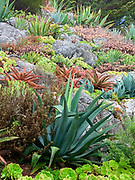 Succulent garden, xeriscape, Garrapata, California