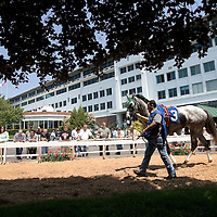 "(PPAGE1) Monmouth Park 5/13/2006  ""RICH CAT"" in the paddock of Monmouth Park while getting ready for the first race of the season.  Michael J. Treola Staff Photographer.....MJT"