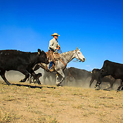 P108 -  Keep'm Movin, Mason McAffee, 6X Ranch, Barton Flat, 2012