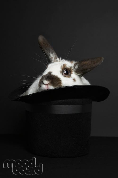 Rabbit in top hat, studio shot