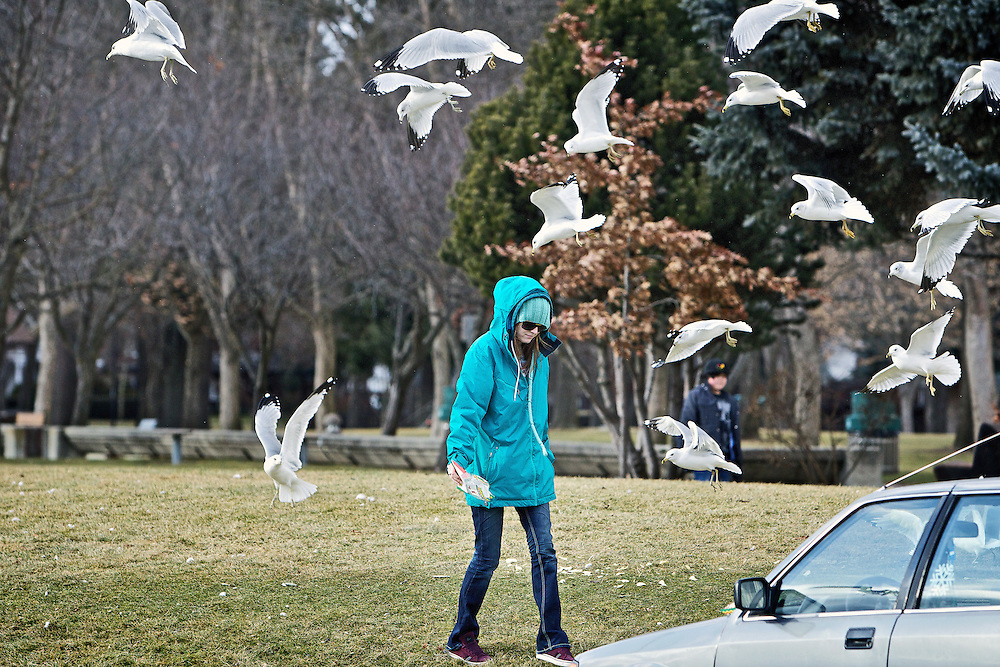 Siobhan Curet walks back to her car after feeding a flock of seagulls Monday at Independence Point.