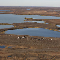Sept 2009 Yamal Peninsula, Siberia, Russia - global warming impacts story on the Nenet people , reindeer herders in the Yamal Peninsula nenet camp