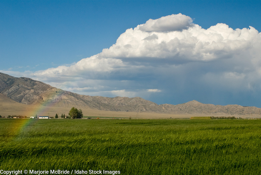 Storm clouds and rainbow form over green wheat field during summer the Lemhi mountain range beyond in the Little Lost river valley near Mackay, Idaho