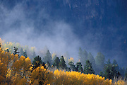 Mist rising over afternoon light on fall aspens in the San Juan Mountains, Uncompahgre National Forest, Colorado
