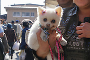 Takayama, Japan Japanese dogs