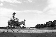 Profile view of a young man seated atop a bundle of grasses on his donkey as they walk along a causeway across the Nile in Upper Egypt.  He holds a stick.  The donkey wears a hobble on one foreleg.  Vask plain sky and landscape beyond.  Viewpoint is low, level with the roadway.