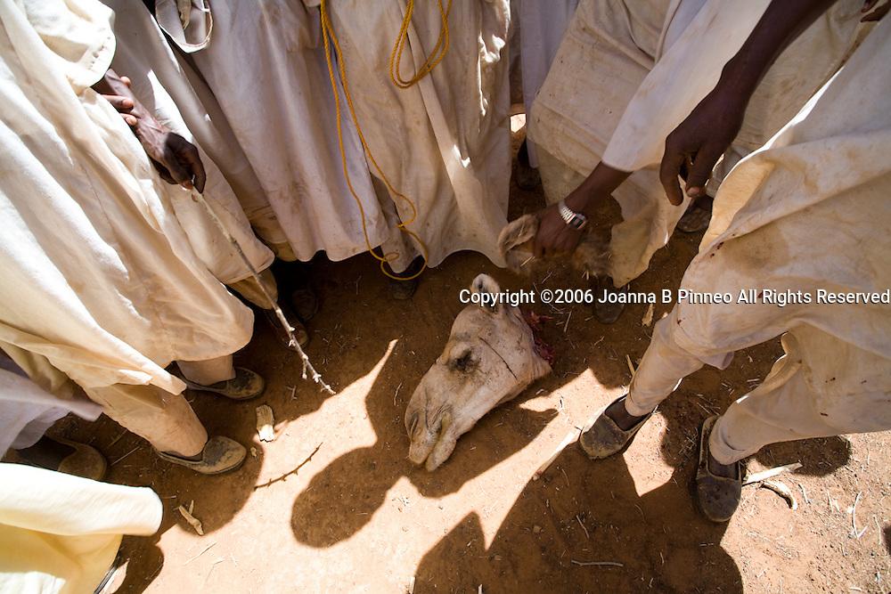 Men gather around a camel's head at a wedding celebration of the Shanabla tribe near El Obeid, Sudan.