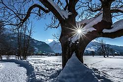 THEMENBILD - die Sonne scheint durch die Äste eines verschneiten Baumes, aufgenommen am 14. Februar 2018, Ort, Österreich // the sun shines through the branches of a snowy tree on 2018/02/14, Ort, Austria. EXPA Pictures © 2018, PhotoCredit: EXPA/ Stefanie Oberhauser