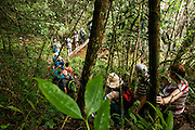 Topes de Collantes nature reserve, Escambray Mountains, Cuba. Tourists hike in the rainforest