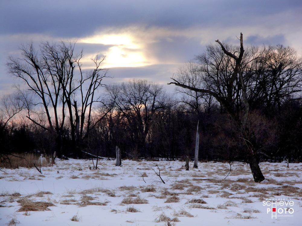 Winter sunset in wetland.