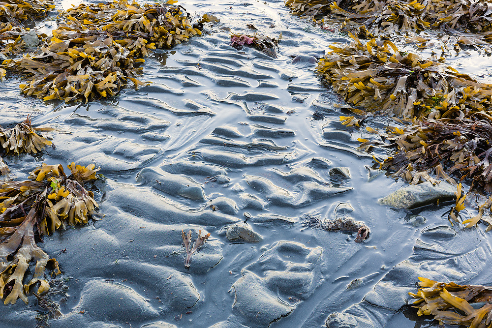 Focus stacking composite of Rockweed and ripples of silt during low tide in Resurrection Bay at Lowell Point near Seward in Southcentral Alaska. Summer. Evening.