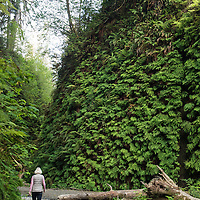 A woman hikes along the fern-lined, lush stream bed in Fern Canyon, a canyon in the Prairie Creek Redwoods State Park in Humboldt County, California, USA. It was one of the shooting locations of the movie Jurassic Park 2: The Lost World.