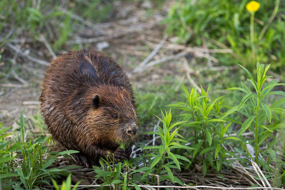 http://Duncan.co/downtown-beaver