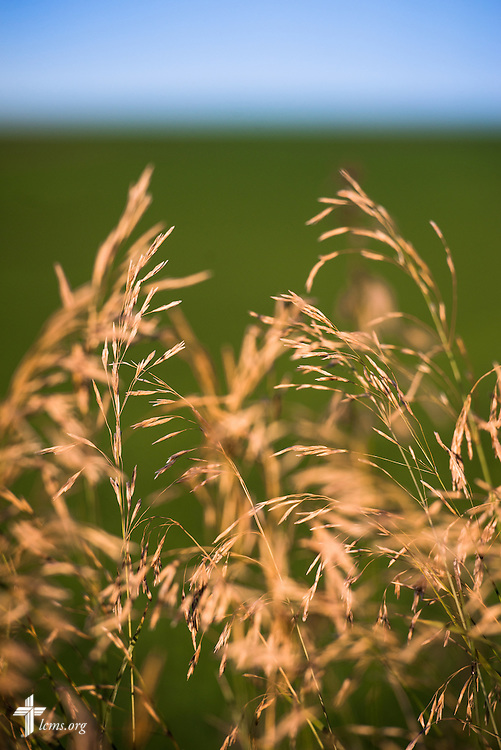 Sunlight grazes a field on Saturday, July 18, 2015, near Mission Central in Mapleton, Iowa. LCMS Communications/Erik M. Lunsford