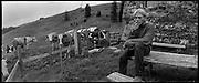 Alpwirtschaft im Grreyerz, économie alpestre en Gruyère. Traditional alpine farming and gathering in Switzerland, Alpine Landwirtschaft in der Schweiz, agriculture de montagne en Suisse. © Romano P. Riedo | FOTOPUNKT.CH
