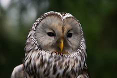 Other Owls