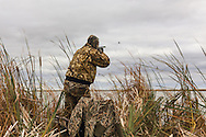 Photo No 4 of series - Hunter kills canvasback drake on open water marsh.