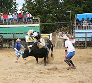bullfighters encircle this bucking bull as it attempts to twist, spin and buck its rider from its back at the Mid Northern Rodeo, Whangarei, New Zealand