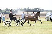Class 29 - Hackney Pony