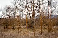 Oasi Pantano di Pignola, Basilicata, Italia, 27/02/2016<br /> Uno scorcio dell'oasi del WWF Pantano di Pignola, a pochi chilometri da Potenza, in Basilicata.<br /> <br /> Oasis Pantano Lake in Pignola, Basilicata, Italy, 27/02/2016<br /> A glimpse of Pantano Lake in Pignola WWF Oasis, few kilometers far from Potenza, in Basilicata.