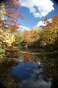 Fall Foliage Central Park