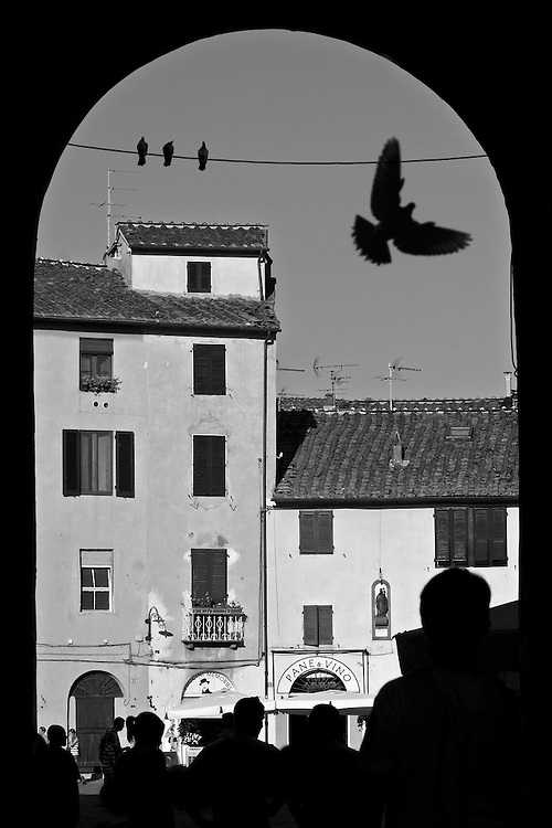 "Black and white photography from Lucca Italy.A dove flying over tha main square by Karl R Lilliendahl photographer.This photo is available as open edition and limited edition giclee print in four sizes. Click on ""Get Print"" to see more details."