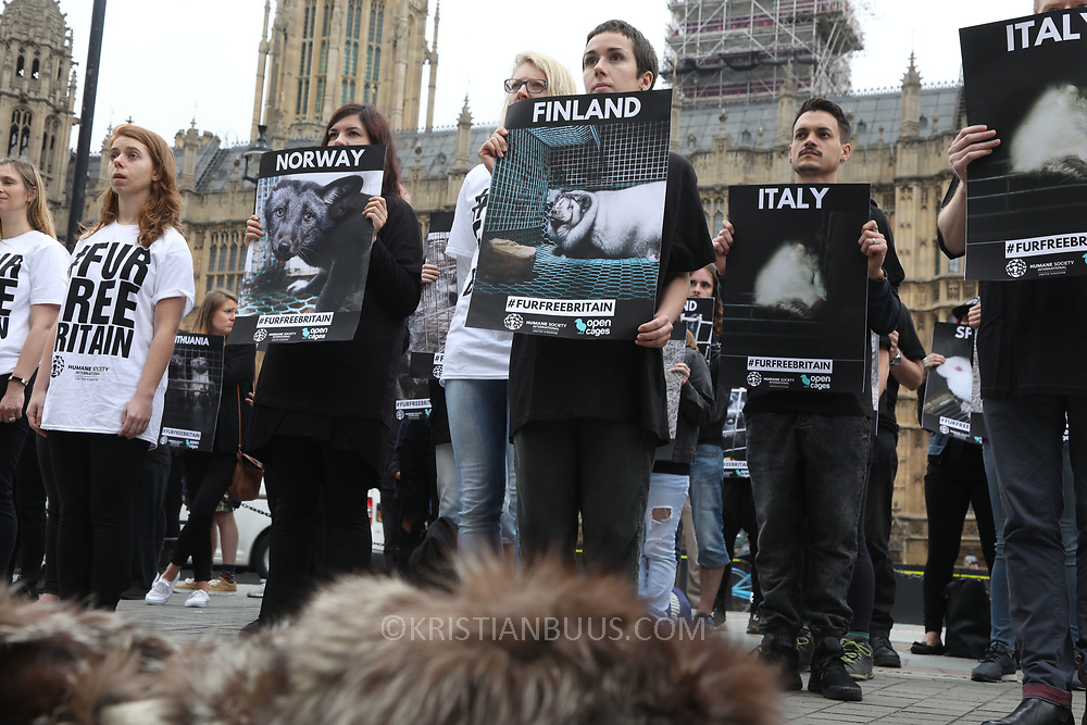 In connection with a debate on banning fur import to Britain in Parliament Open Cage and Humane Society International held a demonstration outside Parliament to draw attention to the continued use of fur in Britain inspite of fur production is banned in Britain. The campaigners want all sale of fur banned.