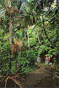 Visitors on trail in El Yunque rainforest; Caribbean National Forest, Puerto Rico.