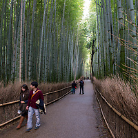 Scene at the Arashiyama Bamboo Grove in Kyoto, Japan.