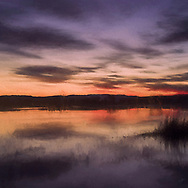 Painterly rendition of a sunset reflection in the Bosque del Apache wetlands in purple and orange hues