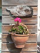 Kruka, blomma och träbit