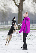UNITED KINGDOM, Windsor: 01 February 2019. <br /> Millie Wellington 12 enjoys the snow with her dog along The Long Walk in Windsor this morning. A number of schools, including Millie's school of St Edwards Middle School were closed today because of the adverse weather. <br /> Rick Findler / Story Picture Agency