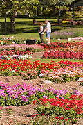 Guests view the Flower Trial Garden at Colorado State University July 25, 2015 in Fort Collins, Colorado. The garden is to evaluate the performance of different annual plant cultivars under the unique Rocky Mountain environmental conditions.
