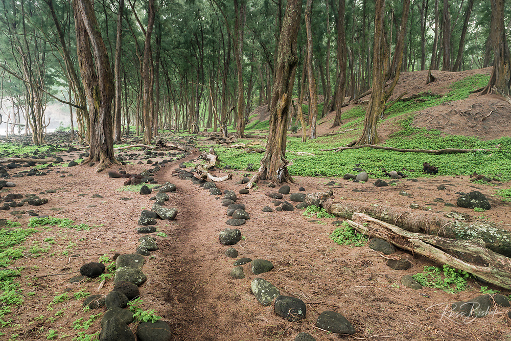 Forest trail at Pololu Beach, North Kohala,The Big Island, Hawaii USA
