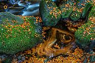 Torq Creek in Killarney National Park, Ireland