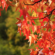 """Autumn Cornered""<br />